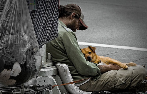 homeless-dog-9-1